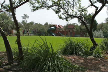 Lawn looking at playground