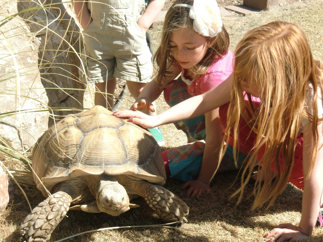 kids with turtle 1