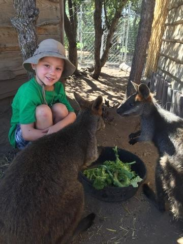 Summer Zoo Camp 2016 - Wallabies 5